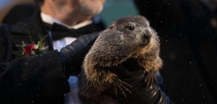 Groundhogs Day 2020: Winter is on the way out